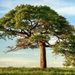 środowisko drzewo